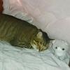 ニトリのこたつ布団を買った感想(^^)かけふとんフカフカ、敷ふとんは薄い目。床暖あるけどホットカーペットで暮らしてます(^^)