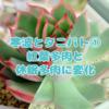 たにログ113 【冬越し】寒波後のタニパト① ローズセダムが休眠モードに!