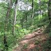 ◆9/16       大鳥池まで④…七曲がり~タキタロウ山荘
