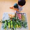 嬉しい野菜とハードな外遊び