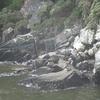 アザラシのいる岩