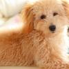 愛犬のにおい対策。室内のにおいを消すためにしている6つの方法。