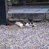 【一日一枚写真】八坂神社の招き猫 Part.3【一眼レフ】