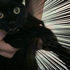 猫のお風呂はノミ・ダニに効果抜群だった!シャンプーの仕方と嫌がらない方法は?