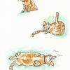 猫はげる③ マロン、ピンチ( ;∀;)