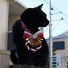 忠猫ジーグ
