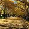 関東の紅葉:昭和記念公園