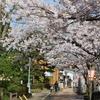 主計町茶屋街「細い路地と千本格子」桜が満開