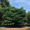 木々との対話