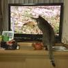 『私の庭』が【小さな旅】NHK に(^^)v