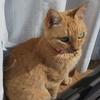 親たちの釣った魚に舌鼓!ついでに実家の猫、茶美の紹介。そして4コマ「太陽」
