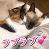 我が家のラブラブな猫カップル【あんず/よもぎ】