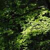 グランパース蛍遊山 夏の森のこと