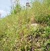 新緑の植物園:メタセコイヤ