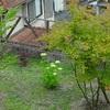 我が家の庭の観察記録㉗&挿し木たち