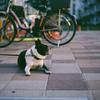JUNE9,2018_待ち犬と薄暮れ