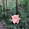 【鎌倉トレラン】ポケモンGOを鎌倉のハイキングコースでやってみた!【天園】