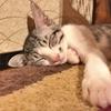 猫が幸せになれる生き方に導いてくれる物語 ネコーチング猫が教えてくれた本当の幸せ