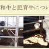 繁殖和牛(^^♪