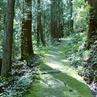 仕事に疲れた時は、森の緑を見に行こう