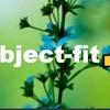 ブログデザイン備忘録 ~ object-fit