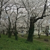 ぼっち花見をした話。(自転車で日本海まで行きたい。トレーニング編)