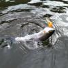 初心者へ魚を釣る方法(ルアーで!)の教え方