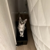 【ネタ】単身女性の家荒らし被害 同居の猫を逮捕 動機は「寂しかったから」