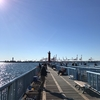 大黒海釣り施設 釣果