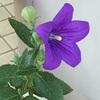 花が咲いた