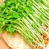 豆苗の栄養と効能!生でも食べられるの?