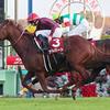 2017年ステイヤーズS GⅡ -母系に重厚な血統と、東京、京都で凡走した馬が巻き返す-