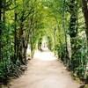 【本部】沖縄旅行記〔12〕ドローンを飛ばしながら備瀬のフクギ並木散歩して備瀬のイノーへ