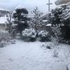 雪が降ったけど
