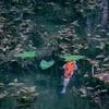 【岐阜県】 〜話題の「モネの池」へ〜 (アクセスや注意点など)