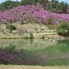 春のるり渓