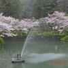 春の山口花風景錦帯橋編パート3