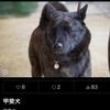 甲斐犬サン、スターになる☆の巻〜(ૢ˃ꌂ˂⁎) ウシシ❤︎