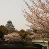 花見ランその3:淀川沿いの背割堤