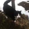 【感動秘話】一匹の猫が負傷した遭難者を救出!この奇跡的な話がネットで大反響を呼ぶ