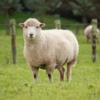 令和2年度 事例Ⅲ 口述試験対策 サンクコストと迷える子羊