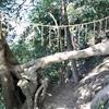 日野の春日神社 木々が縁を結ぶという伝説(横浜市港南区)