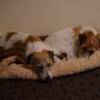 人気のベッド