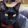 今日の黒猫モモ&白黒猫ナナの動画ー570