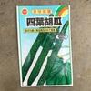 作物No.31 美味しい胡瓜!秋どり四葉胡瓜の栽培を開始!