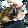 【猫ブログ】プルさんからプレゼント貰った(泣)&自宅で皮下点滴24回目