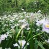 芝生が気持ちいい!横浜の公園まとめ