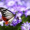 花粉シーズン
