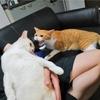 猫の必殺技 空気砲