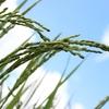福島産の米を食う我が家と福島産の食材を嫌う韓国
